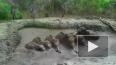 Видео: в Таиланде люди спасли шесть тонущих в трясине ...