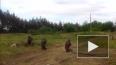 """Новости Новороссии: батальон """"Прикарпатье"""" дезертировал ..."""