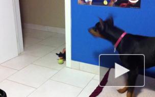 Троллинг собаки собакой