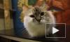 Ученые выяснили, почему кошки откликаются на свое имя