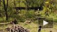 Петербуржцы заметили вырубку деревьев в Южно-Приморском ...