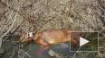 """Трупы """"кремированных"""" собак в Горелово до сих пор ..."""