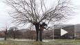 Видео: 150-летнее дерево в Черногории превратилось ...