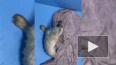 В Петербурге спасли серого тюленя