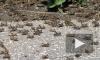 В Астраханской области введен режим ЧС из-за нашествия саранчи