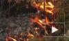 Экспертиза подтверждает факт поджога лесов Братска