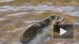 Экологи и тюлени победили застройщиков: в форте Риф ...