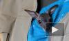 В Ленинградском зоопарке показали спасенного человеческим теплом кенгуренка