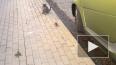 Видео: Мышь-ниндзя атаковала кошку и стала знаменитой