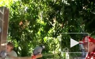 Попугай-певец