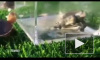 Посетителей китайского заповедника пугает черепаха мутант