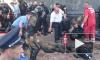 Взрыв гранаты у Рады: умер четвертый пострадавший боец Нацгвардии