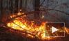 В Чернобыле в зоне отчуждения возник пожар, горит 130 га леса
