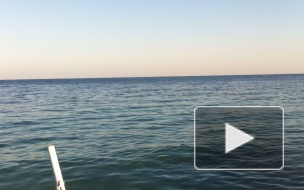 Акулы: видеосвидетельство очевидца