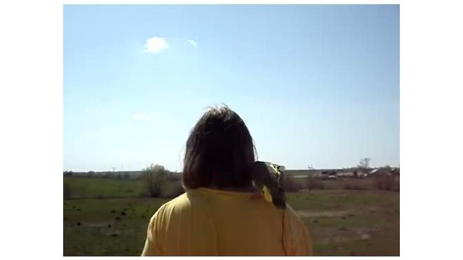 Опен-эйр для попугая