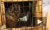 Строители на Комендантском едят дворовых собак