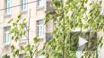 В сквере на улице Типанова в честь Дня города высадили ...