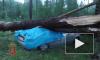 Разгул стихии: В Красноярском крае женщину с ребенком раздавило в машине деревом