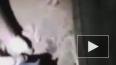 Видео из Бразилии: Похороненный заживо новорожденный ...