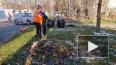Более 86 тысяч кубометров мусора: в Петербурге завершился ...