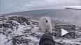 Видео из Чукотки: Бесстрашный фотограф гоняет белого ...