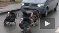 В Пушкине невоспитанные индюки переходят дорогу в ...