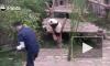 Работа мечты: Сотрудника Московского зоопарка направили в Китай учиться правильно обниматься с пандами