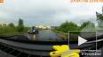 Видео: водитель пропустил уток, которые переходили ...