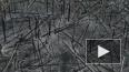 Последствия пожара в Чернобыле сняли на видео с дрона