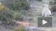 Житель Выборгского района встретил барсука на прогулке ...