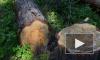 В Выборгском районе женщину убило дерево, спиленное ее знакомым