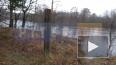 Река Луга вышла из берегов в деревне Мойка