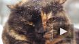 Ученые засняли кошек, питавшихся человеческой плотью