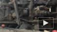 Видео: На КАД столкнулись два грузовика, один из низ пер...