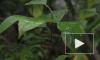 Витамин С килограммами. В ботаническом саду  рекордный урожай цитрусовых