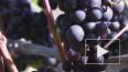 Кардиохирург опроверг пользу красного вина