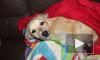 Полиция не расследует массовое отравление собак в Петербурге