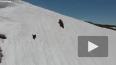 Напряженное видео: Медвежонок карабкается по снежному ...