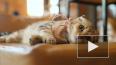 Кошки выражают эмоции с помощью мимики, но мы этого ...