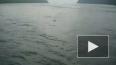 Акулы-убийцы из Приморья по-прежнему на свободе