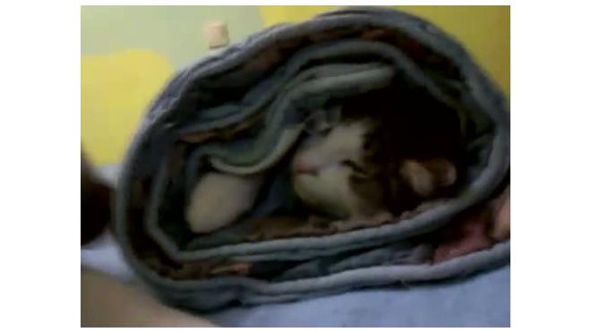 Шаурма из кошки