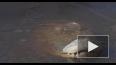 В Северной Каролине аллигаторы вмерзли в лед
