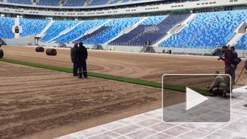 """Видео: укладка газона на """"Крестовском"""""""