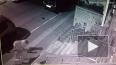 Видео: котик прогнал со своей территории стаю из шести с...