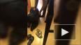 Появилось видео спасенного енота Йокки