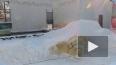 В Пензенском зоопарке для белого медведя сделали снежную...