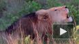 ЮАР: В заповеднике львы съели браконьеров, которые ...