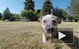 Эксперты: зевота собак не говорит об эмпатии к человеку