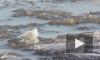 На Обводном канале человек провалился под лед, его ищут спасатели