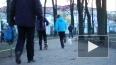 Собака Юрия Гальцева погибла в результате массовой ...